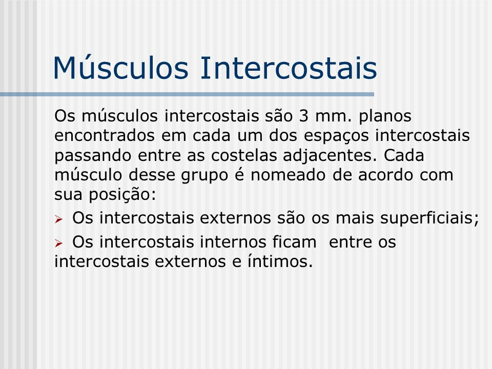 Músculos Intercostais