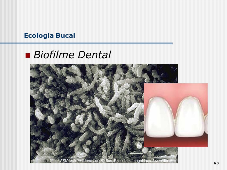 Ecologia Bucal Biofilme Dental