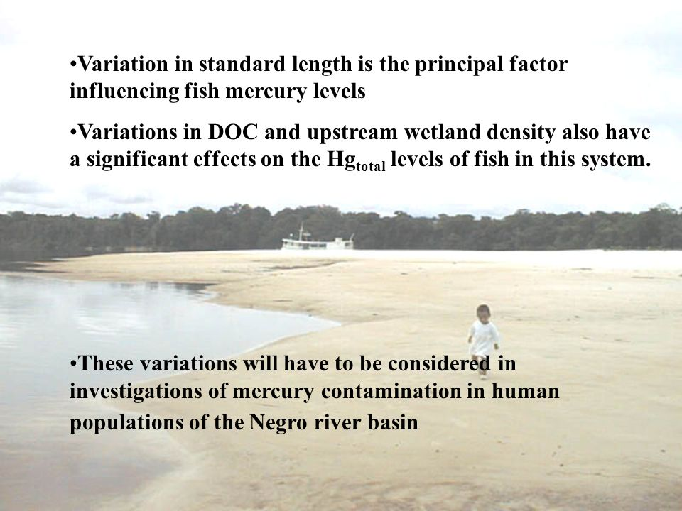 Variation in standard length is the principal factor influencing fish mercury levels