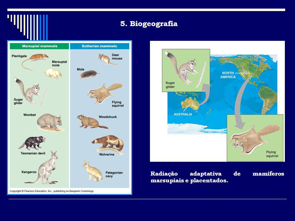 5. Biogeografia Present day distribution of marsupials relates to what we know about locations of continents during continental drift.