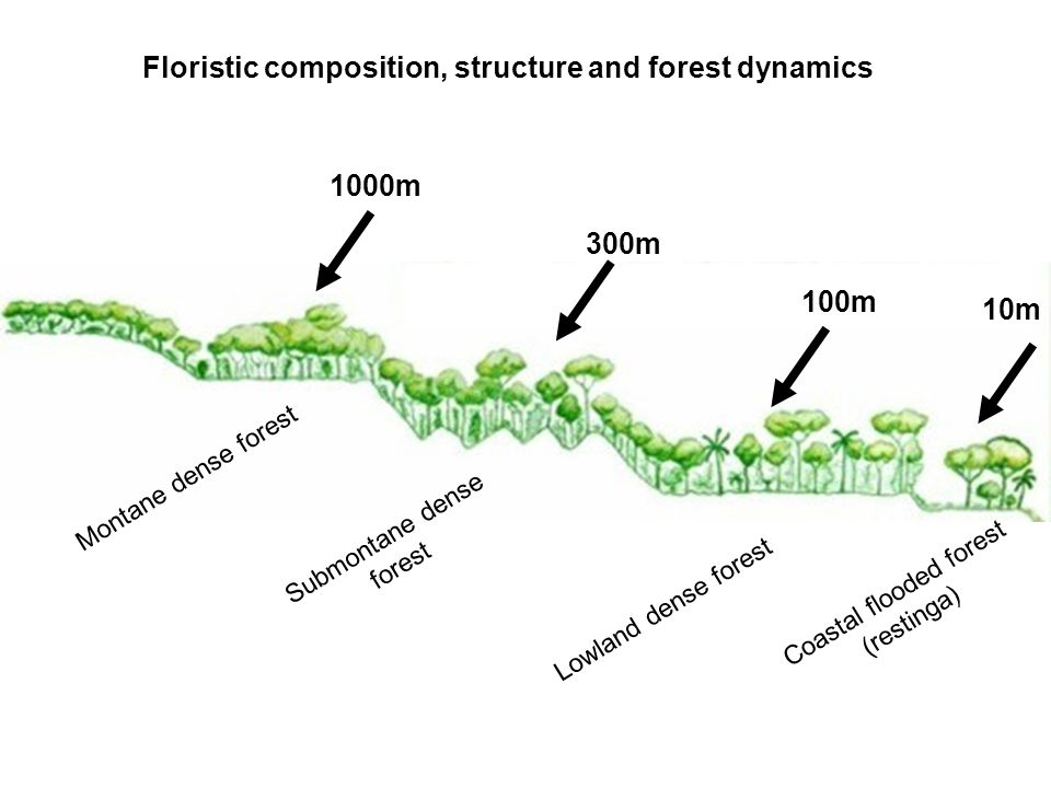 Floristic composition, structure and forest dynamics