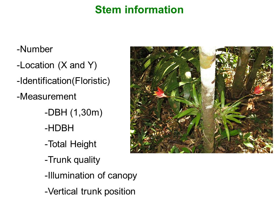 Stem information Number Location (X and Y) Identification(Floristic)