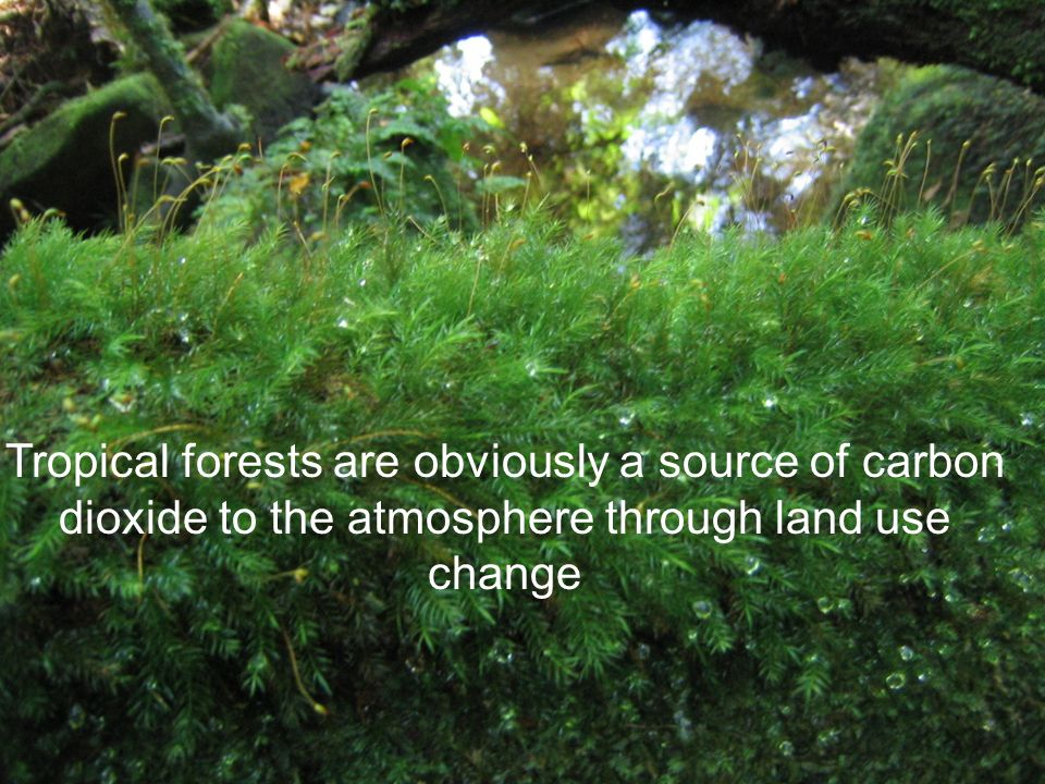 Tropical forests are obviously a source of carbon dioxide to the atmosphere through land use change