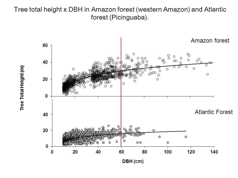 Tree total height x DBH in Amazon forest (western Amazon) and Atlantic forest (Picinguaba).
