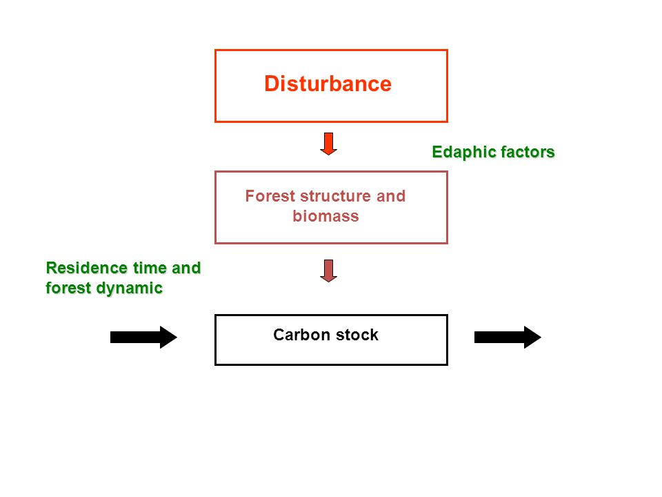 Forest structure and biomass