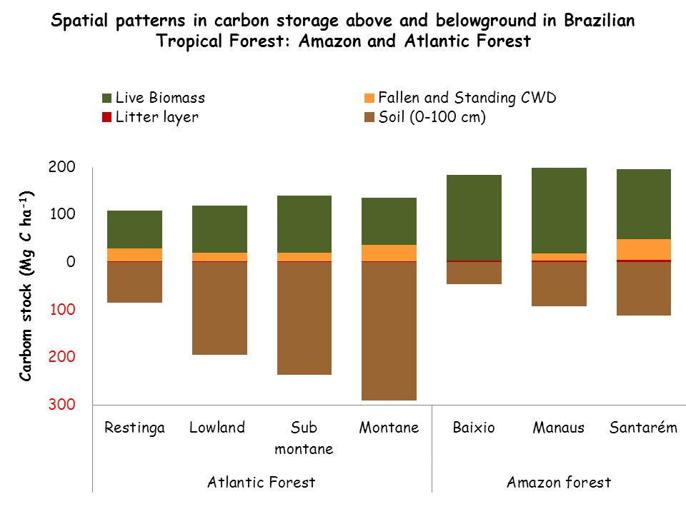 Spatial patterns in carbon storage above and belowground in Brazilian Tropical Forest: Amazon and Atlantic Forest