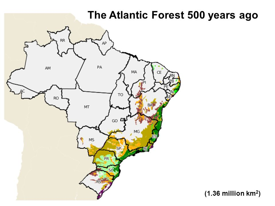 The Atlantic Forest 500 years ago