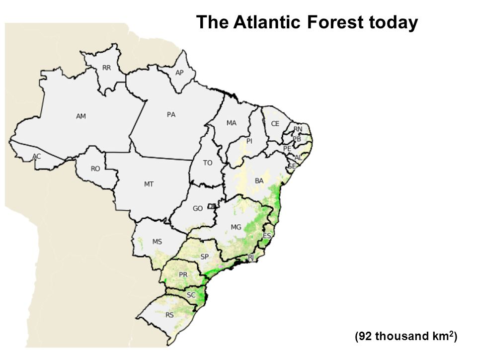 The Atlantic Forest today