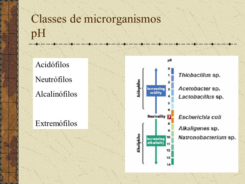 Classes de microrganismos pH