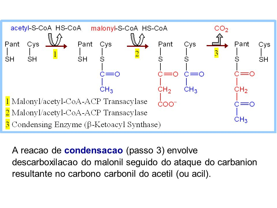 A reacao de condensacao (passo 3) envolve descarboxilacao do malonil seguido do ataque do carbanion resultante no carbono carbonil do acetil (ou acil).