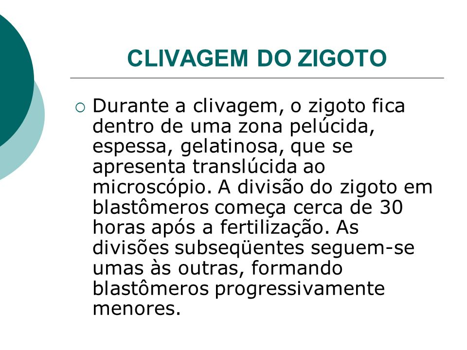 CLlVAGEM DO ZIGOTO