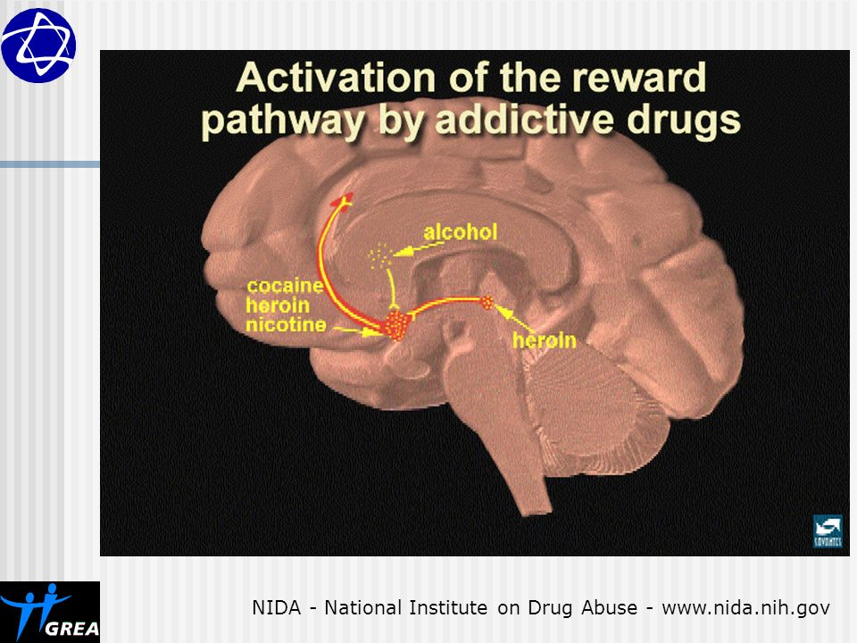 NIDA - National Institute on Drug Abuse -