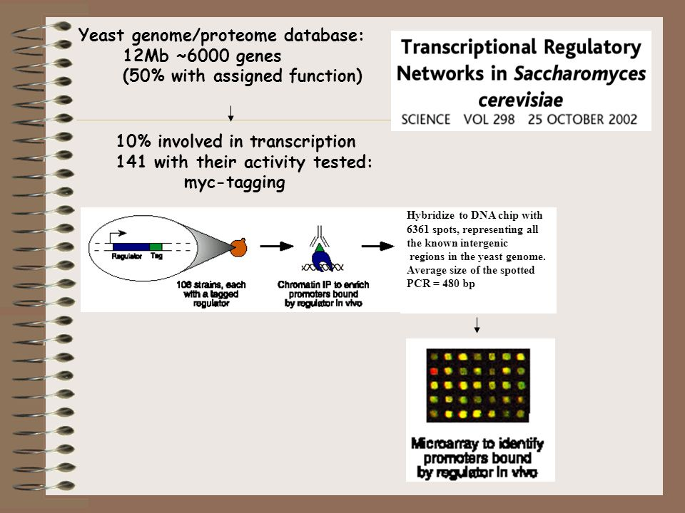 Yeast genome/proteome database: 12Mb ~6000 genes