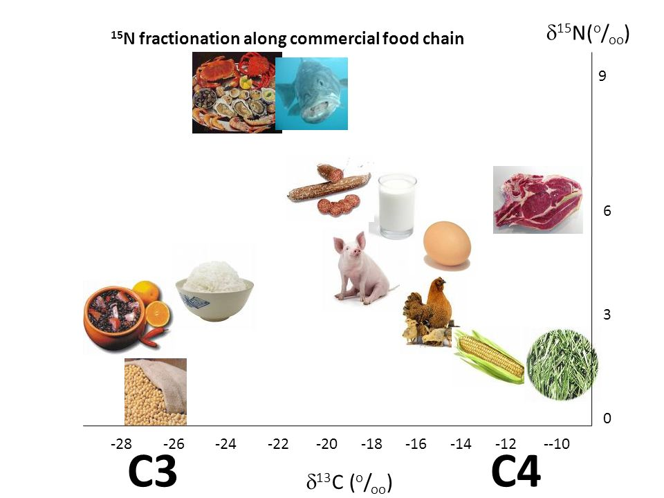 15N fractionation along commercial food chain