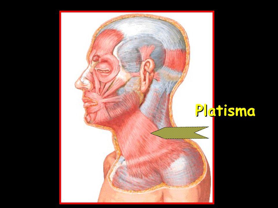 Atractivo Platisma Ilustración - Anatomía de Las Imágenesdel Cuerpo ...