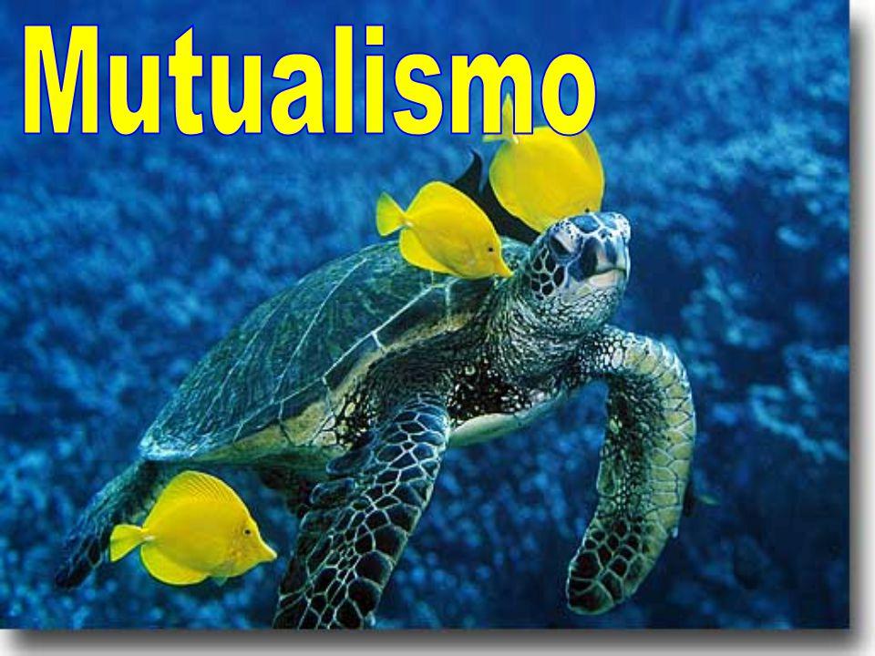 MUTUALISMO BIOLOGIA DOWNLOAD