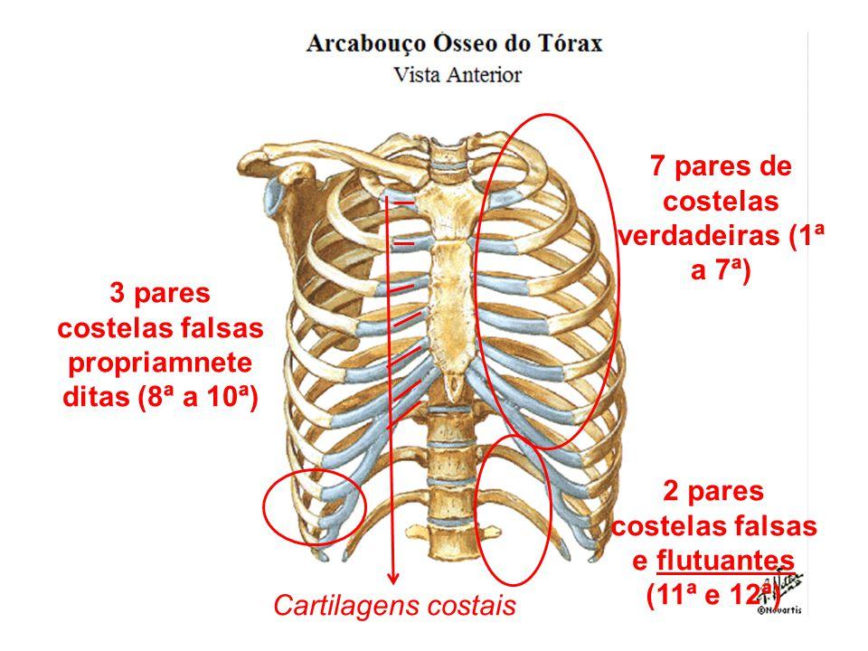 Anatomia humana ossos cranio