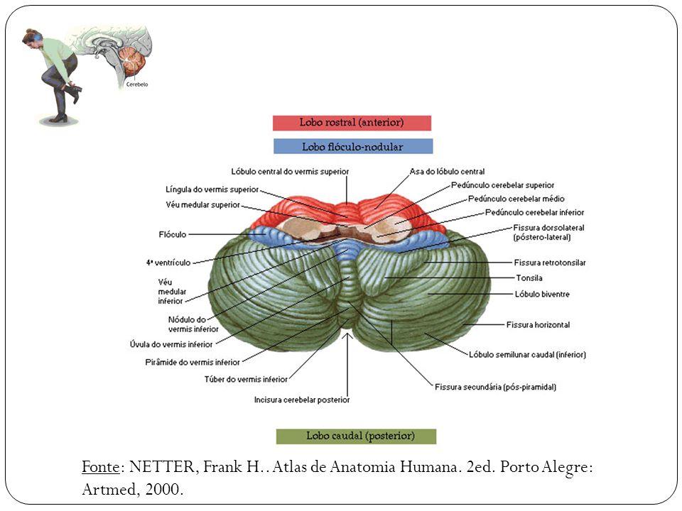 Famoso Anatomía Del Cerebelo Motivo - Anatomía de Las Imágenesdel ...