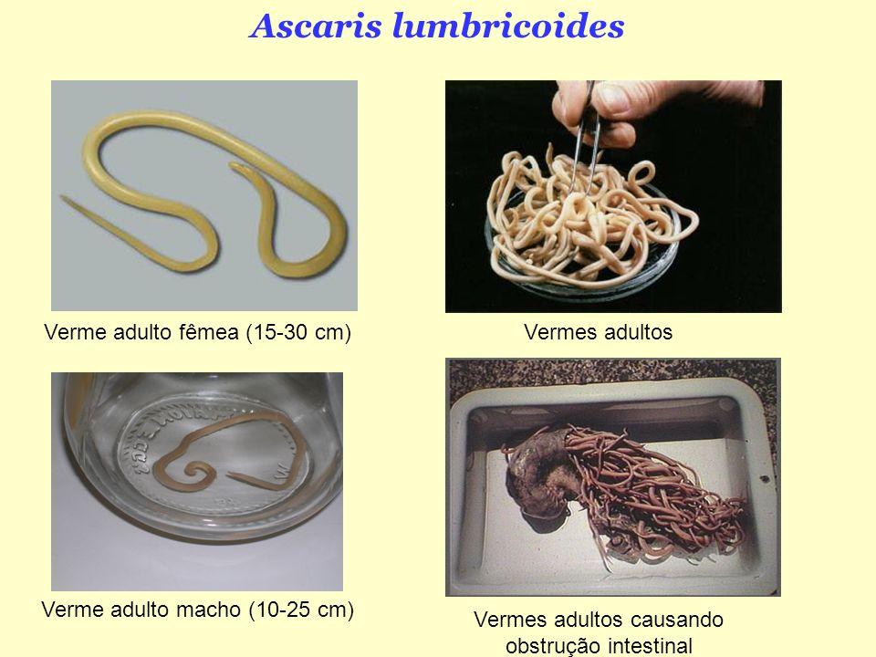 giardia un organism model condiloame sub limba