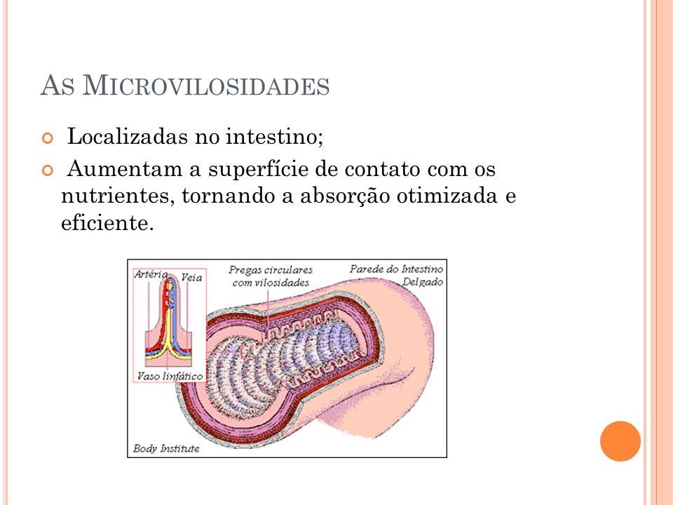 As Microvilosidades Localizadas no intestino;