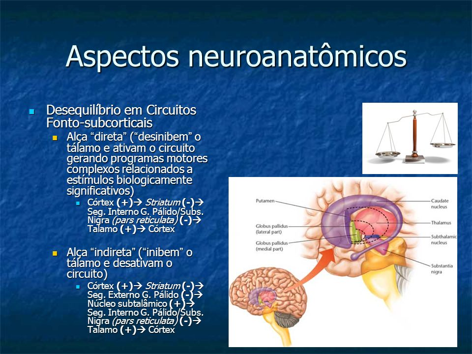Aspectos neuroanatômicos