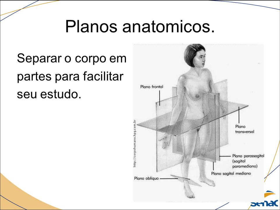 Fantástico Anatomía Plano Oblicuo Elaboración - Imágenes de Anatomía ...