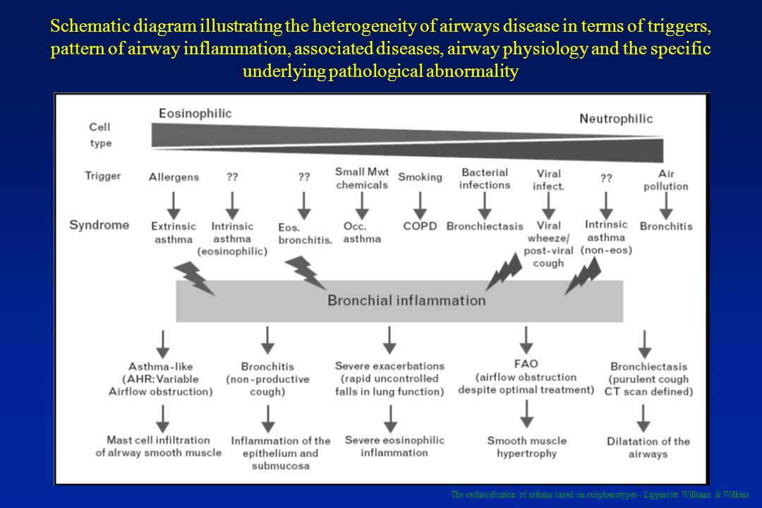 Schematic diagram illustrating the heterogeneity of airways disease in terms of triggers, pattern of airway inflammation, associated diseases, airway physiology and the specific underlying pathological abnormality
