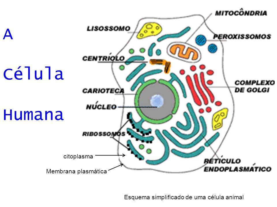 Famoso Diagrama De Células Animales Para Colorear Colección ...