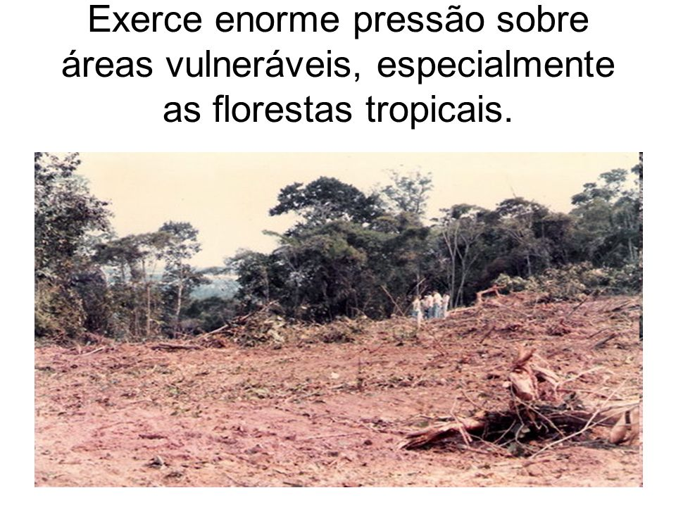 Exerce enorme pressão sobre áreas vulneráveis, especialmente as florestas tropicais.