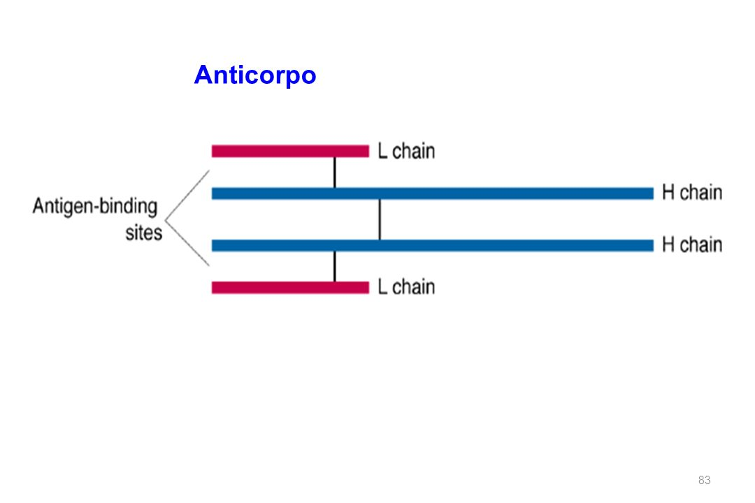 Anticorpo