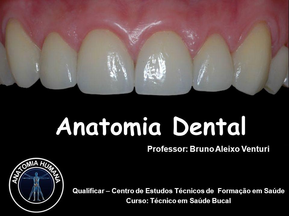 Anatomia Dental Professor: Bruno Aleixo Venturi - ppt carregar