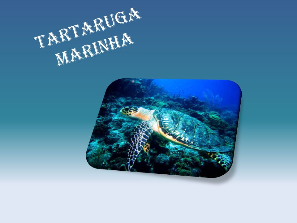 Ppt Carregar: Tartaruga Marinha.
