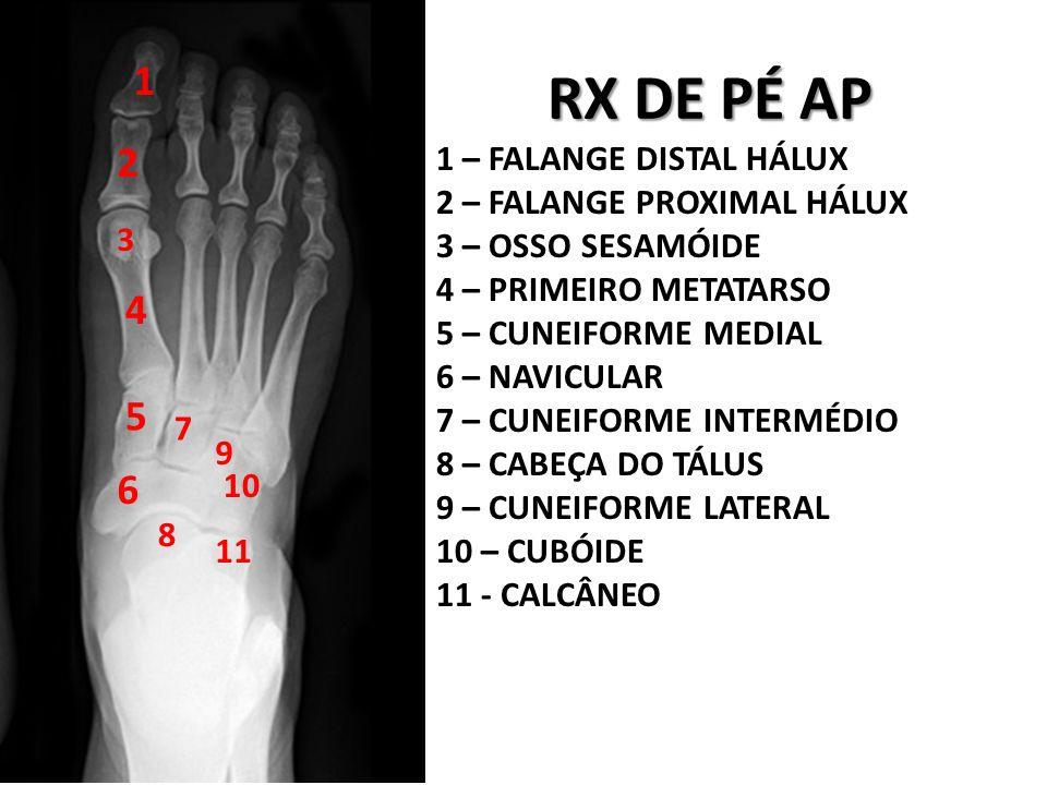 MATERIA DA PROVA de Anatomia radiologica - ppt video online carregar