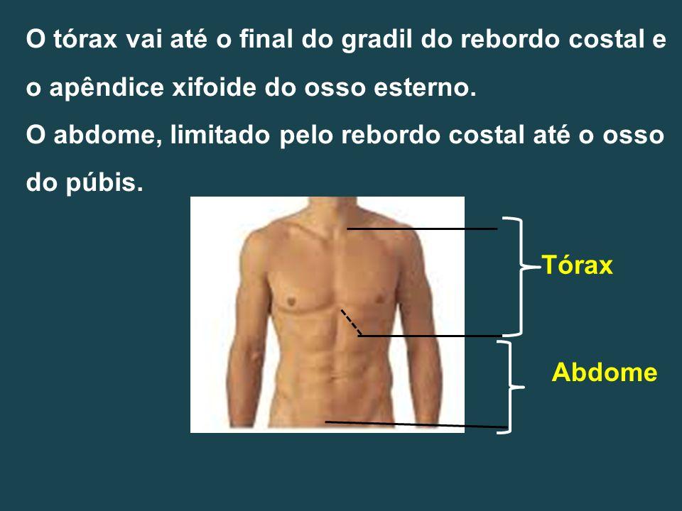 Anatomia e fisiologia do pancreas